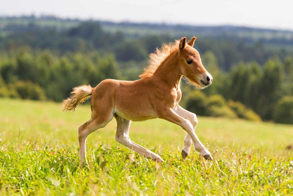 Assurance embryon : garantie du poulain vivant