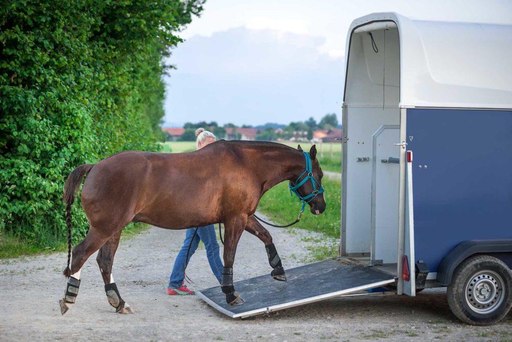 Transport ponctuel d'un cheval ou d'un poulain