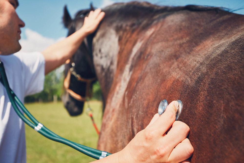 Soins vétérinaires courants : où se trouve la limite ?