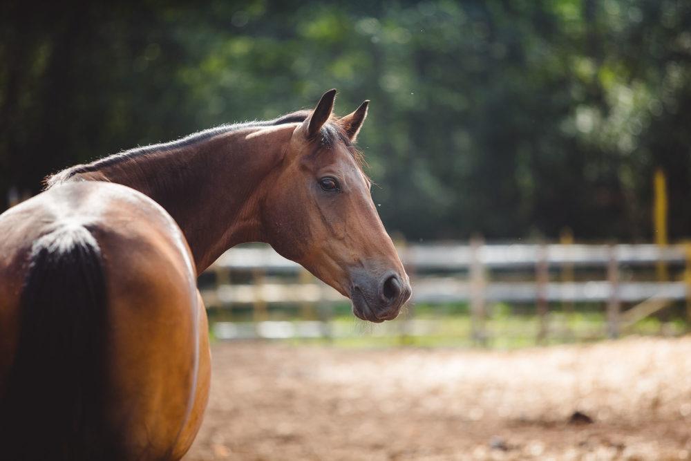 Estimer la valeur de votre cheval