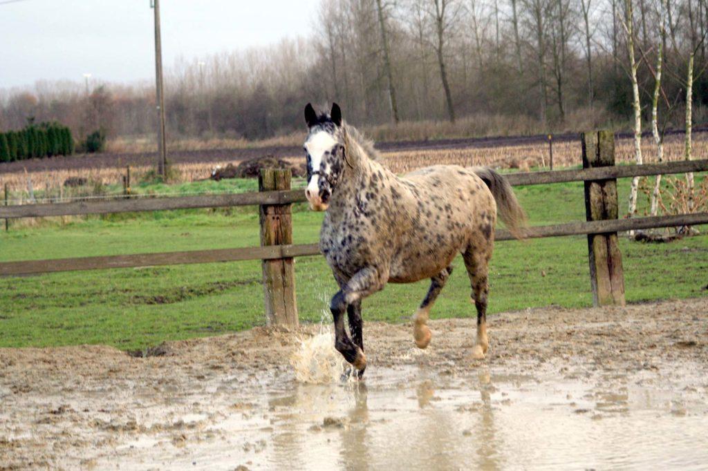 Qu'est ce que la gale de boue ?