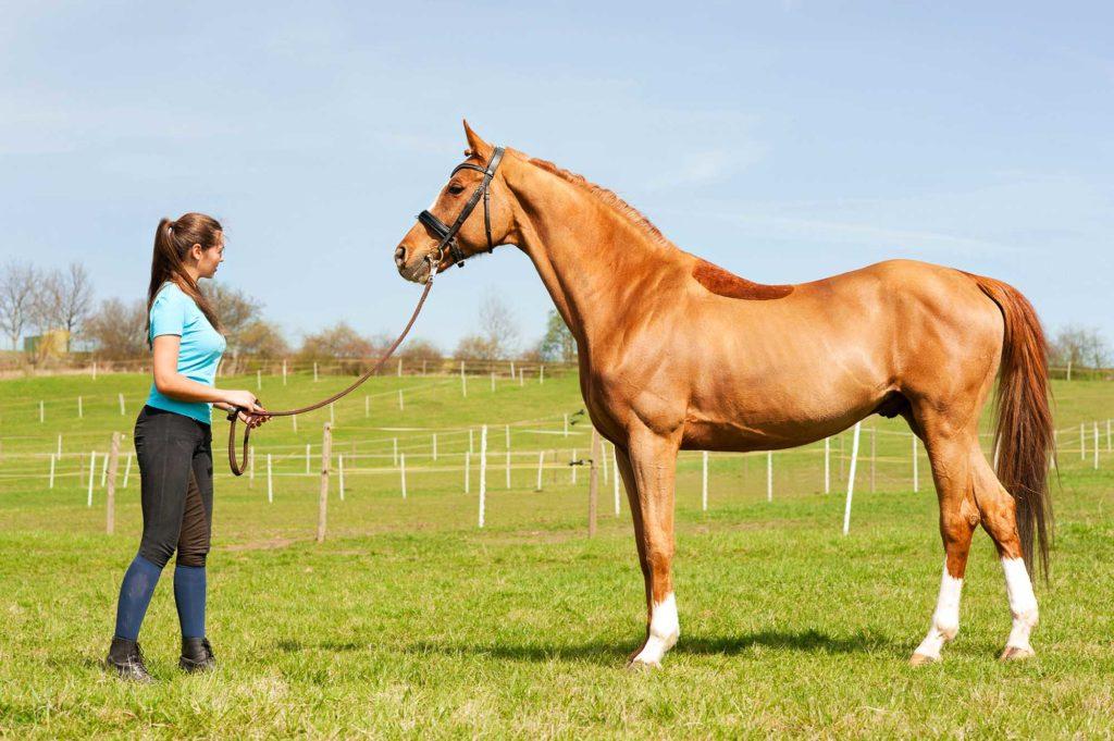 Quels sont les conditions pour annuler la vente d'un cheval ?