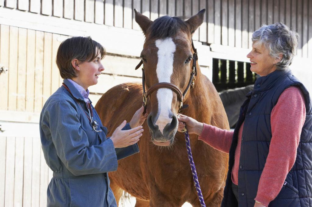 En quoi consiste la visite vétérinaire d'achat ?