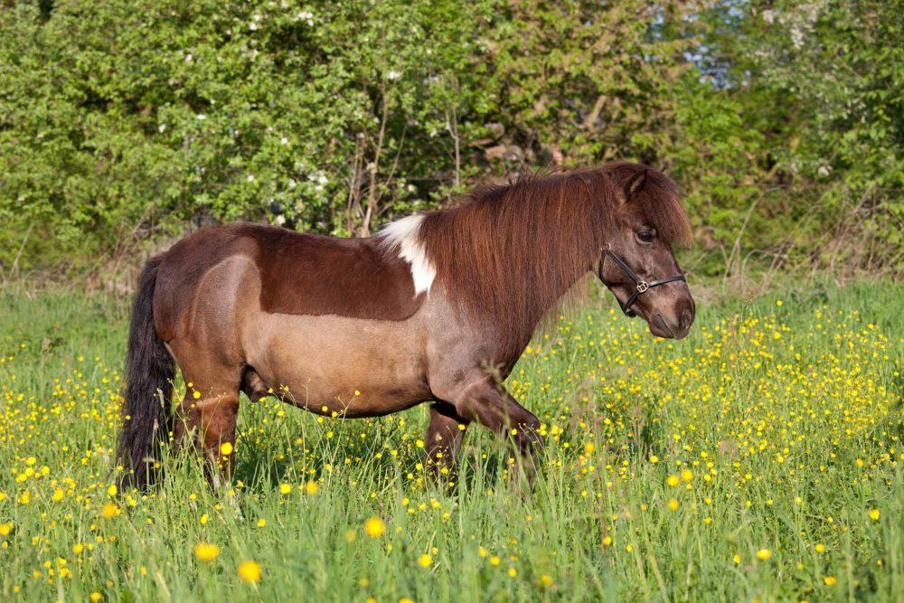 Quelles sont les différentes tontes pour un cheval ?