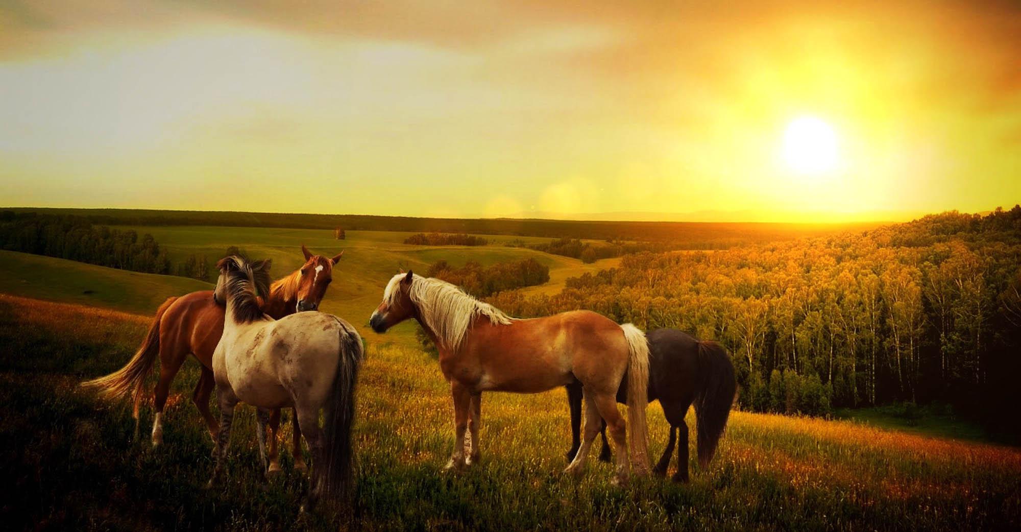 Des vacances pour mon cheval
