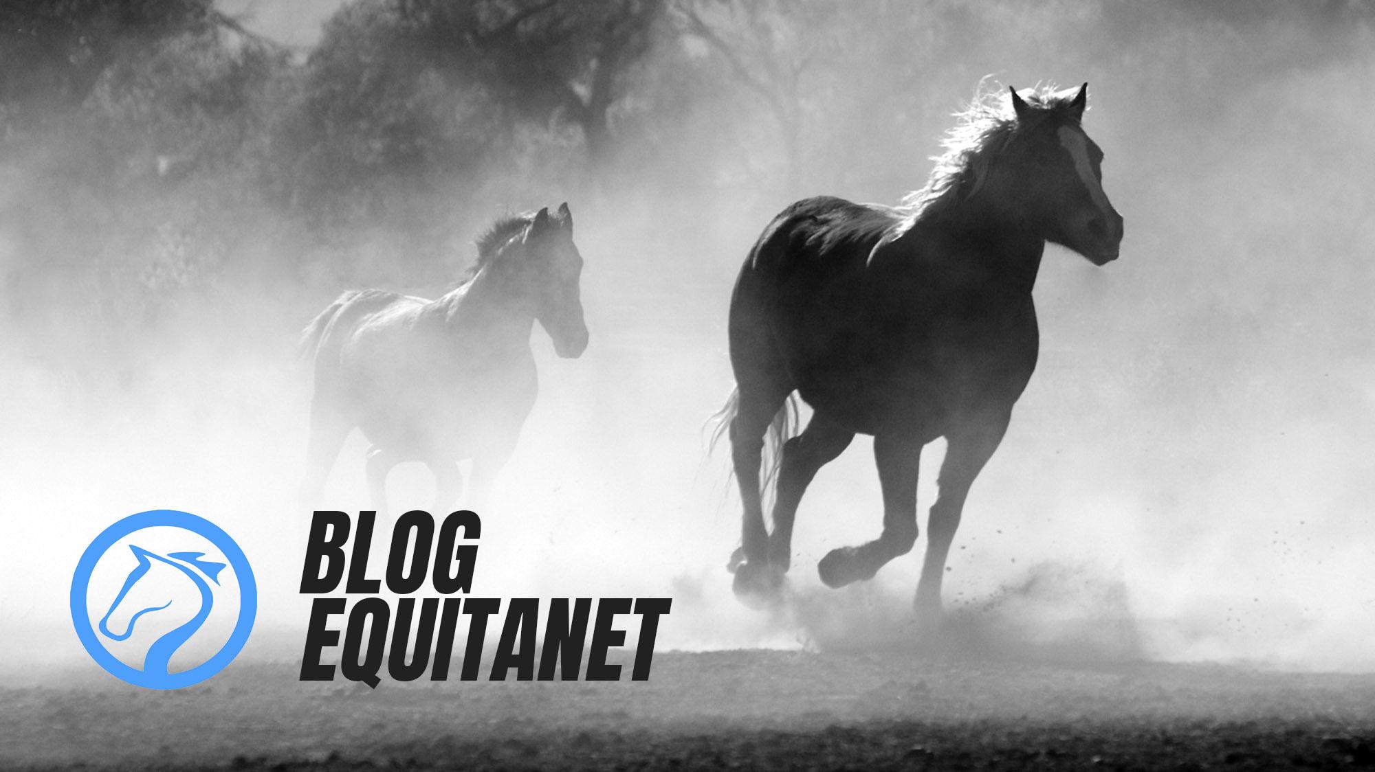 Blog Equitanet