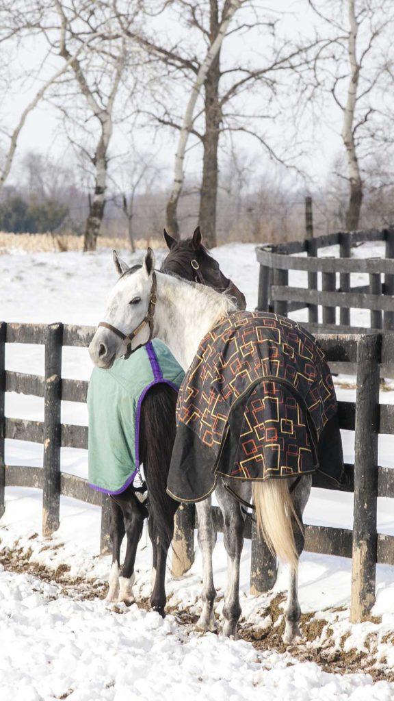 La différence entre résistance et grammage d'une couverture de cheval