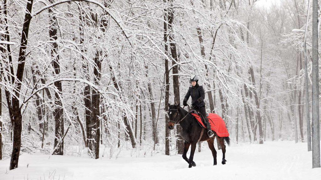 Les équipements du cheval en hiver